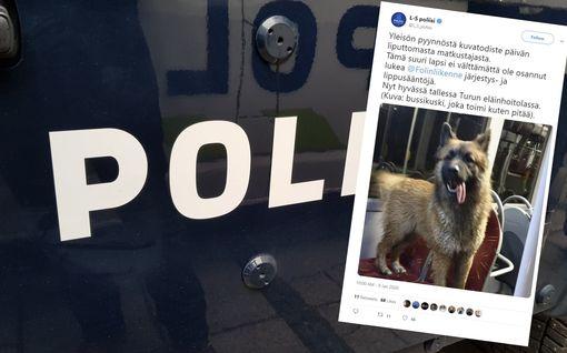 """Poliisilla erikoinen hälytys Turussa: """"Suuri koira nousi yksin bussiin, jätti lipun ostamatta, matkusti kiltisti pitkän matkaa"""""""