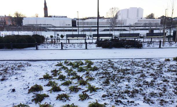 Helsingin Töölönlahdella oli sunnuntaina iltapäivällä lunta noin sentin verran, jos sitäkään.