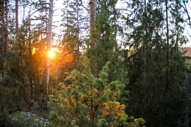 VIIMEINEN MAISEMA? Nelan löytöpaikalta aukeaa kaunis metsämaisema.