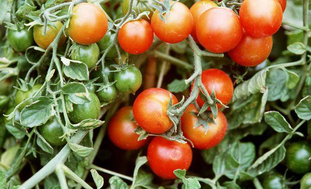 Hedelmiä ja vihannaksia koskevat korkeat vaatimukset johtavat ylituotantoon ja valtavaan ruokahävikkiin.