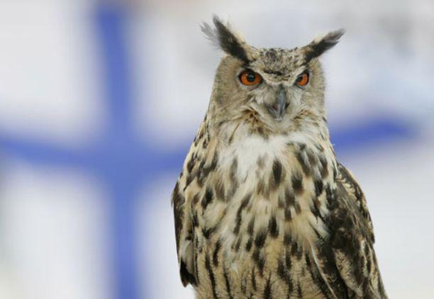 Petolintu seurasi silmä kovana Suomen otteita. Kentälle pöllähtänyt huuhkaja keskeytti ottelun yli kuudeksi minuutiksi.