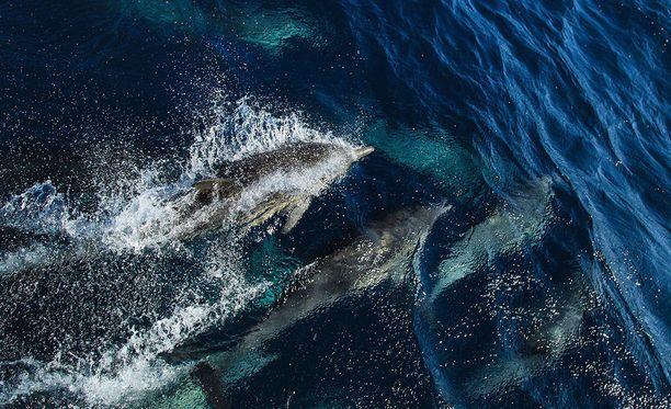 Tuoreen tutkimuksen mukaan maailman valtamerissä täysin hapettoman veden määrä on nelinkertaistunut viimeisen 50 vuoden aikana.
