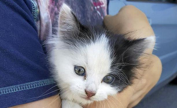 Kuka omistaa tämän kissanpennun? Pirkanmaan pelastuslaitoksen palomiehet pelastivat sen seinän välistä maanantaina.