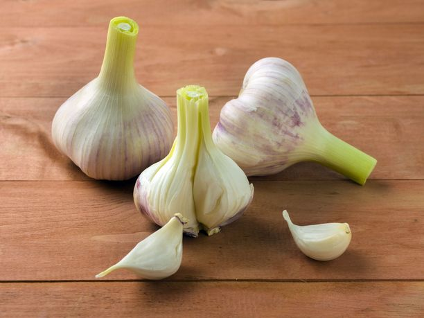 Valkosipuli on maustekasvi, jota usein joko inhotaan tai rakastetaan.
