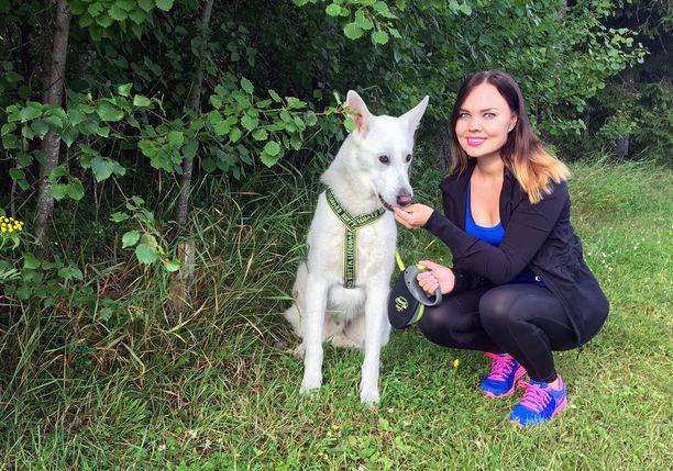 Henna Hytinkosken valkoinenpaimenkoira Huli ei enää ulkoile kaulapannassa, vaan valjaissa.