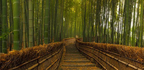 Yksi Saganon bambumetsän halki johtavista poluista.