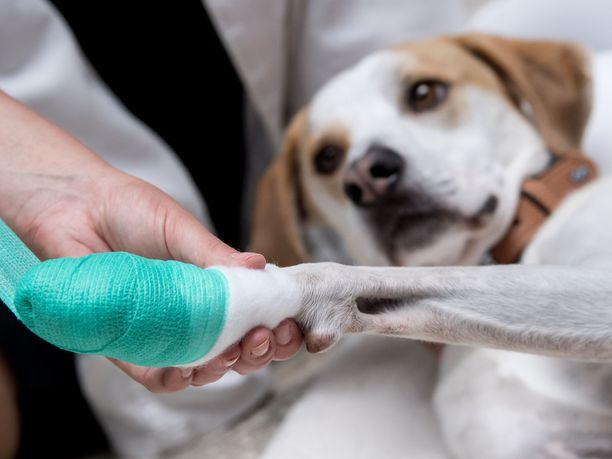 Lemmikkien hoitoon panostetaan ja se tarkoittaa myös kalliita hoitoja.