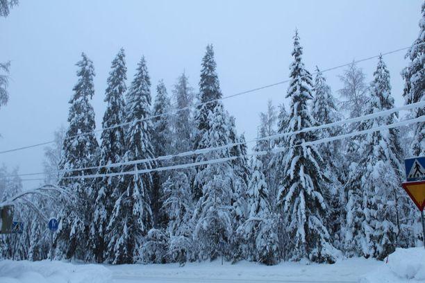 Painava tykkylumi on monin paikoin kallistanut puita sähkölinjojen päälle.