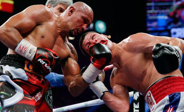 Näin mehukkaasti osui Orlando Salidon vasemman käden koukku.