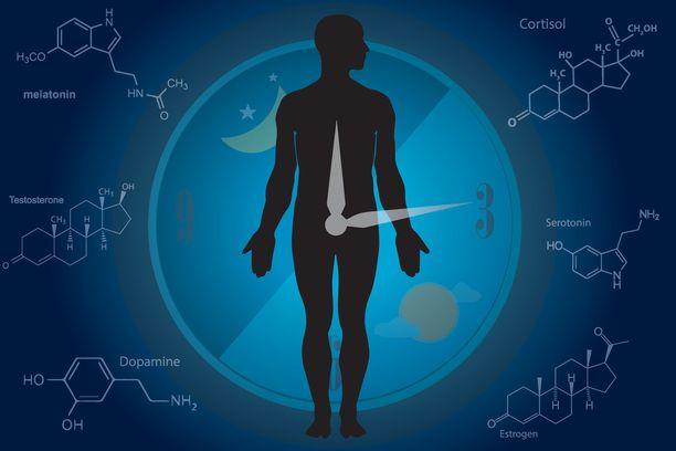 Uni-valverytmi eli päivärytmi on monimutkainen asia, johon vaikuttavat myös monet hormonit.