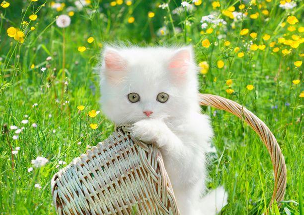 Kissat saivat oman juhlapäivänsä vuonna 2002. Venäjällä kissapäivää juhlitaan maaliskuussa ja Yhdysvalloissa lokakuussa.