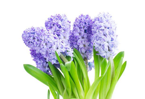 Sininen on tyylikäs väri onnittelukimppuun, mutta myös tyypillinen surunvalittelun väri.