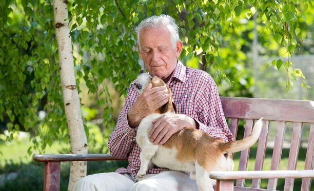 Kaverikoirat vierailevat esimerkiksi ilahduttamassa vanhuksia. Kuvituskuva.