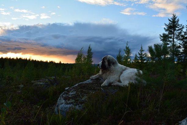 Ukko asustelee Pohjois-Karjalan maisemissa.