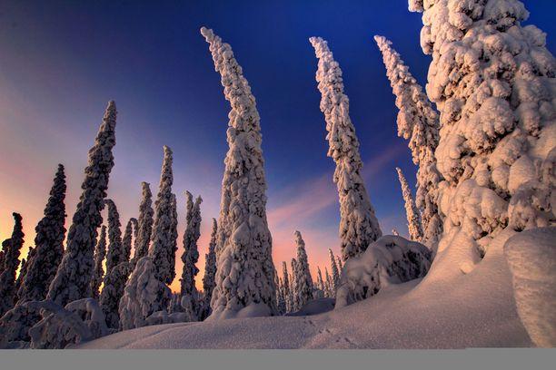 Joulu näyttää tänä jouluna Lapissa hyvin erilaiselta kuin etelässä. Kuvituskuva.