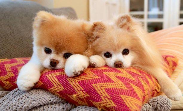 Boo (vas.) ja Buddy kerkisivät olla yhdessä 11 vuotta.