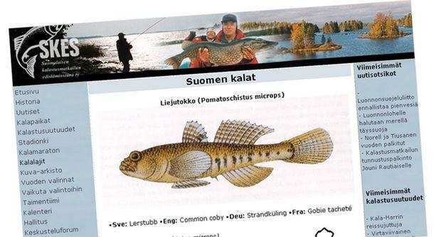 Lue lisää tietoa liejutokosta ja muista vesiemme asukeista vaikka Suomalaisen kalastusmatkailun edistämisseura ry:n verkkosivuilla.