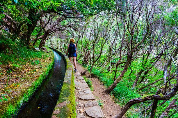 Madeiran levadat kulkevat suorastaan taiaonomaisissa maisemissa.