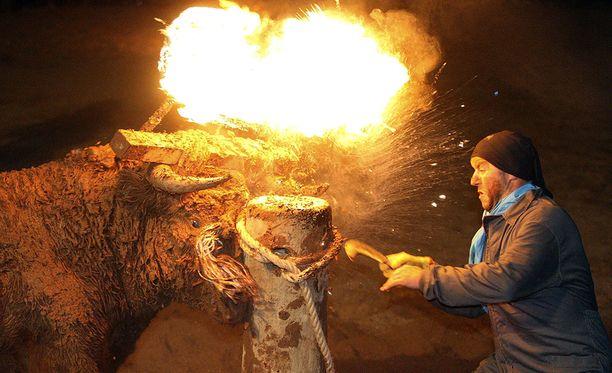 Eläinsuojelujärjestöt ovat yrittäneet saada Toro de Fuego -tapahtumat kiellettyä.