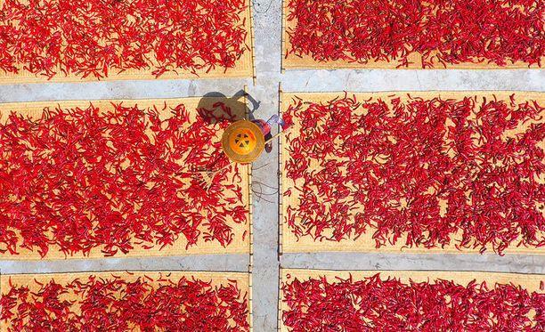Tuliset chilit houkuttelivat paikalle lukuisia paikallisia sekä turisteja.