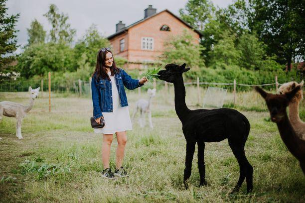 Alpakkaniityn asukit ovat vieraiden suosiossa. Niiden villa pääsee hyötykäyttöön.
