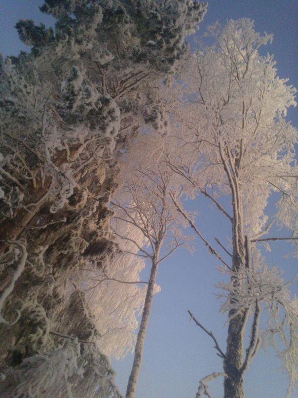 Kaunis talvimaisema.