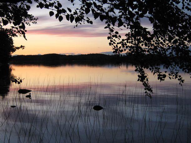 Kesäillan rauha. Yksinäinen lintu järven tyyneydessä.