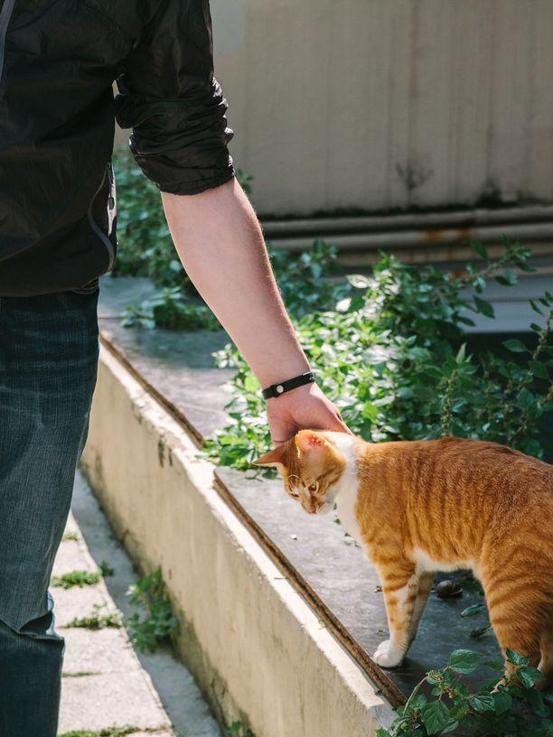 Matkalla suloisia kissoja ja koiria kannattaa ihailla vain ilman koskettamista.