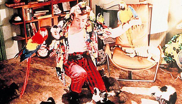 ACE VENTURA - LEMMIKKIDEKKARI Jim Carrey tekee läpimurtoroolinsa valkokankaalla kaikkien maailman lemmikkien suojelijana.
