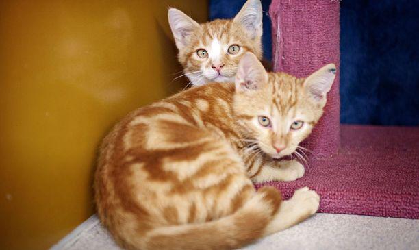 Valtaosa eli 88 prosenttia HESYlle viime vuonna tulleista eläimistä oli kissoja.