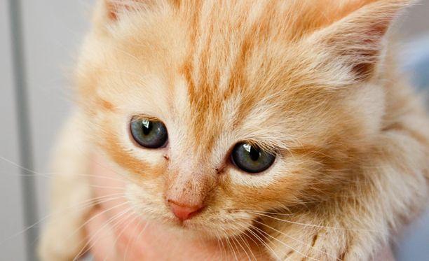 Kissa selvisi salamatkustamisesta vain turkin likaantumisella. Kuvan kissanpentu ei liity tapaukseen.
