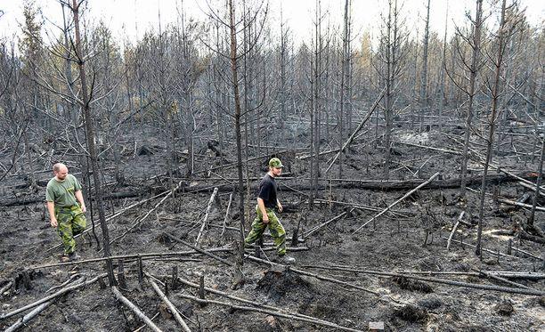 Ruotsissa taisteltiin mittavia maastopaloja vastaan myös vuonna 2014. Tältä Seglingsbergissä näytti viikon ajan riehuneen palon jäljiltä.