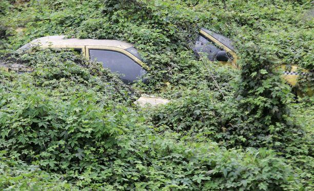 Zombiautojen hautuumaita on muuallakin Kiinassa. Tämä hylätty auto on kuvattu Chongqingissä.