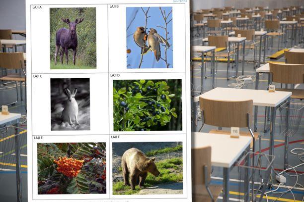 Ylioppilaskokeen lajintunnistustehtävässä esiintyi torstaina metsän eliöitä.