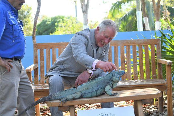 Prinssi Charles silitti varovasti iguaania. Tilanne nauratti prinssiä.