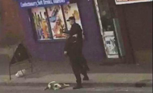 Pitbullit terrorisoivat sunnuntaina aamupäivällä Boltonin keskustaa.