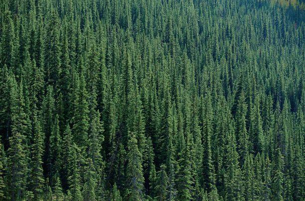 EU:n komission päivitetty metsästrategia julkaistaan keväällä 2021.