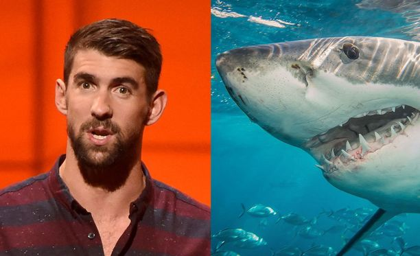 Michael Phelps on innostunut haikaloista.
