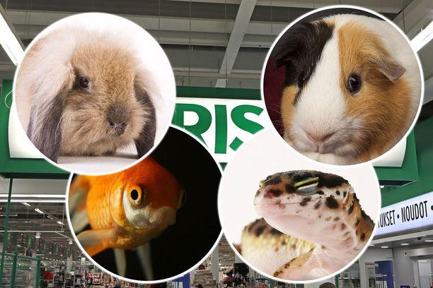 Joensuun Prisma haluaa myydä kaneja, kaloja, matelijoita ja jyrsijöitä.