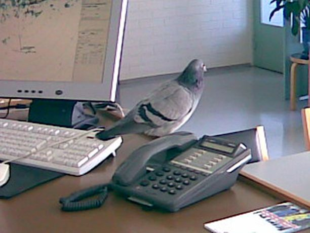 Konttori sai ikkunasta uuden työnjohtajan päivän askareita tarkkailemaan.