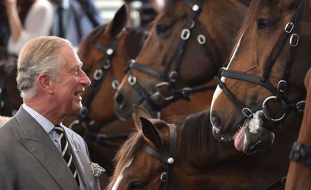 Hevonen pystyy aistimaan ihmisen kasvoista onko tämä hyvällä vai huonolla tuulella.