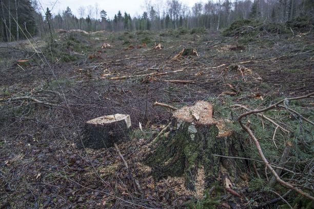 Avohakkuutyömaa kuvattuna Raumalla viime vuonna.