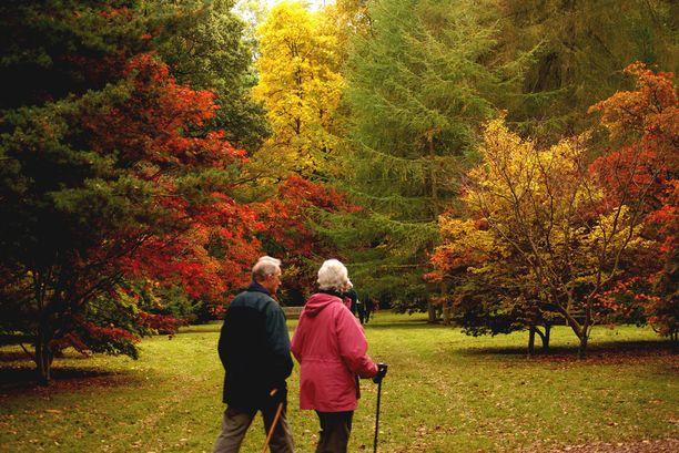 Westonbirtin arboretum kerää reippaasti kävijöitä syksyisin.