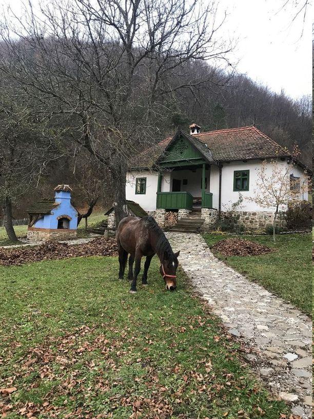 Majatalon alueella käyskentelee hevosia ja kanoja.
