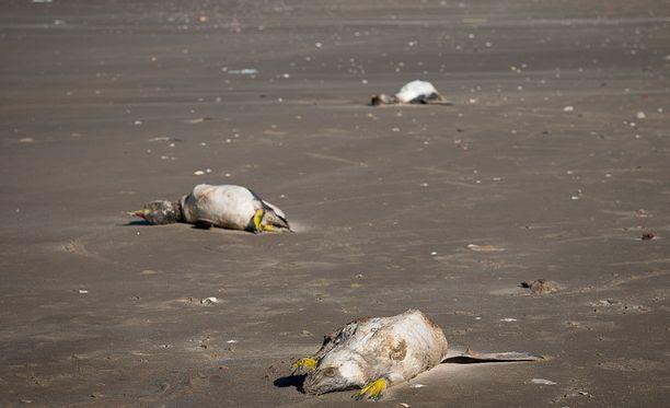 Tutkijoiden mukaan kuolleet pingviinit eivät vaikuttaneet nälkiintyneiltä tai uupuneilta, eikä niissä ollut vammoja tai öljytahroja.