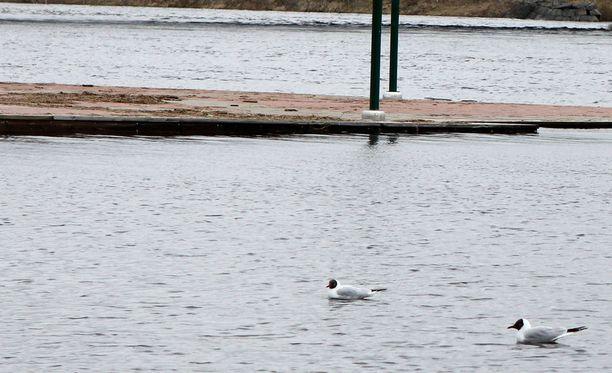Ounasjoen pinnanousu on hidastunut viime päivien aikana. Arkistokuva.