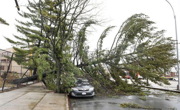 Queens Village, New York City perjantaina. Rajut tuulet ovat kaataneet paljon puita.