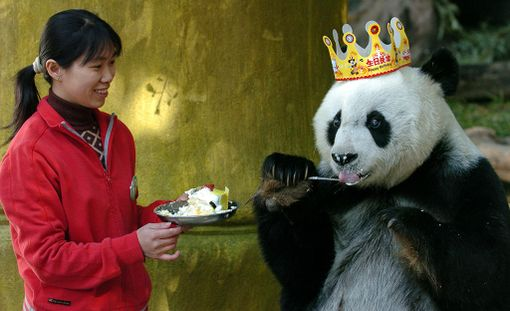 Basi oli Kiinassa julkkis, jonka syntymäpäiviä juhlittiin laajasti.Tässä on meneillään 35-vuotispäivät.
