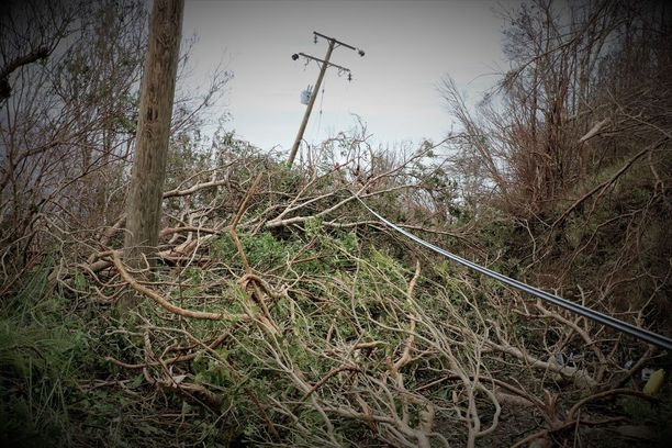 Puut olivat kaatuneet sähköjohtojen päälle.