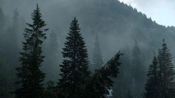 Romaniassa on murhattu kaksi metsänvartijaa tässä kuussa.